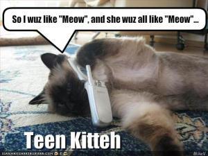 teen kitteh